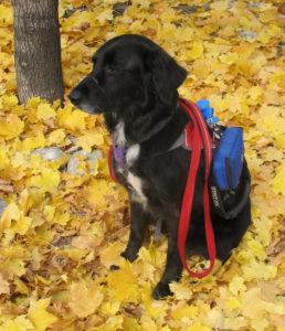 ellie-durango-co-autumn-leaves-oct-2015-enhanced