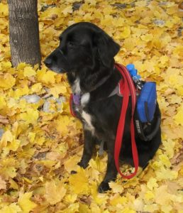 Lead With Your Heart Dog Training Pet Dog Service Dog Training